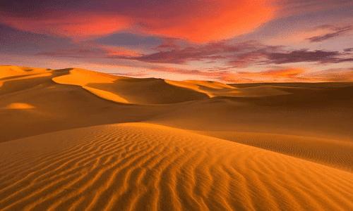 day night camel trekking