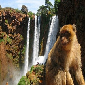 full day trip to ouzoud waterfalls from marrakech