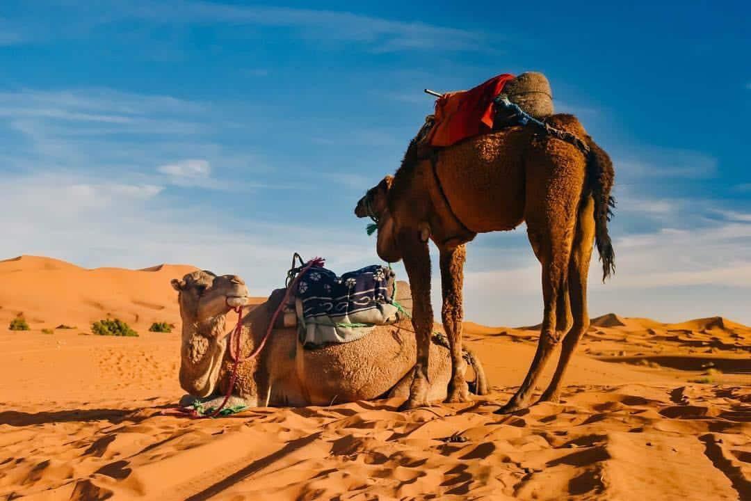 Morocco Sahara Experience