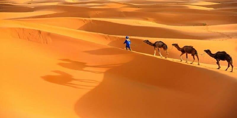 3 days desert tour from fez
