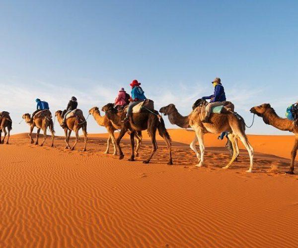 Camel trekking desert tours